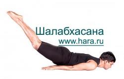 Шалабхасана, поза Саранчи в йоге